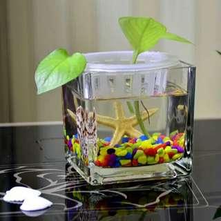 細魚專用缸    (淡水魚用品)
