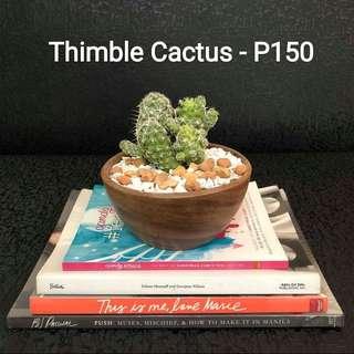 Benguet Cactus & Succulent