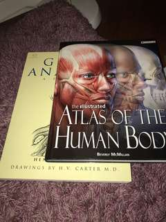 Human bodies books