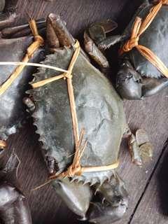 Bisa add wa kami 0813-86-86-86-39  yg ini bisnis kepiting serios dan untuk rumah makan atau yg baru mau buka restoran silakan tanpa calo langsing pemiliknya