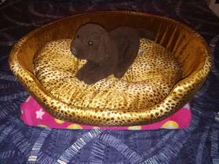 Dog Bed (Gold)