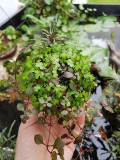 Floating Kusa, floating plants, island plant display