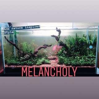 Aquascape Concept - Melancholy VOL 2