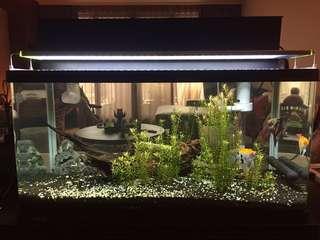 Fish tank 水族箱