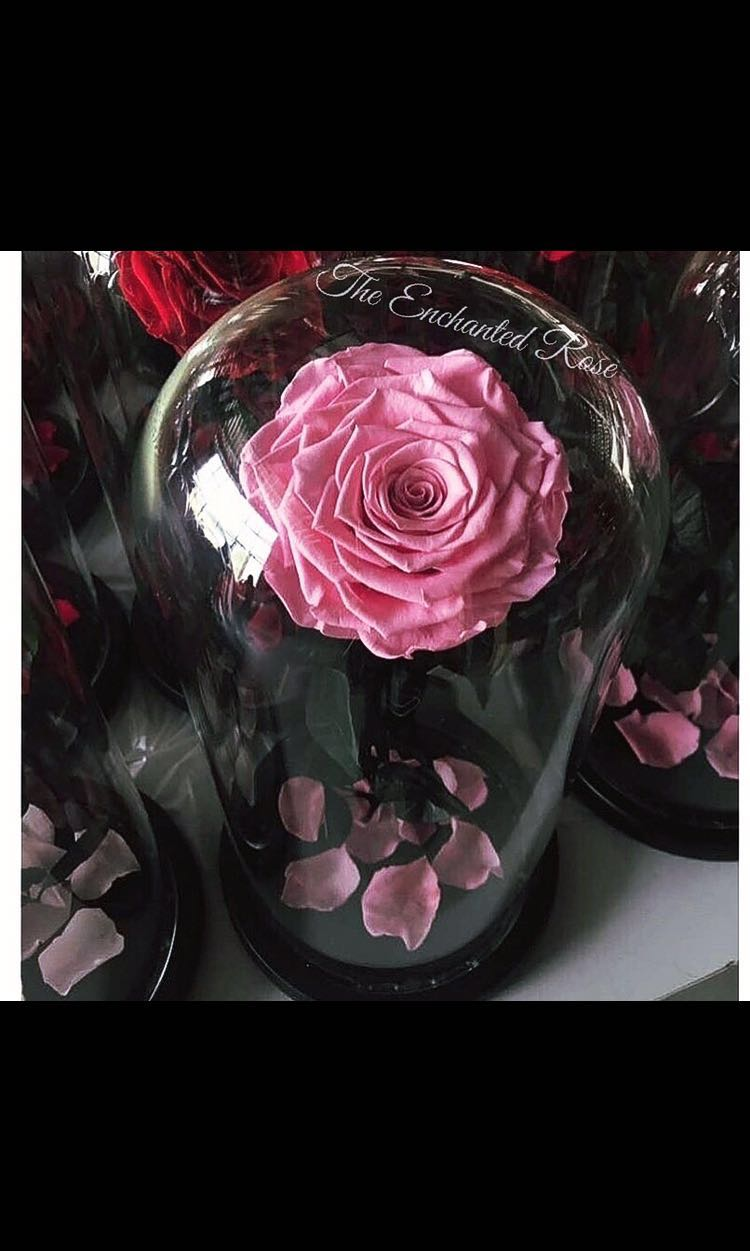 Beauty the beast enchanted rose preserved rose in glass domebell beauty the beast enchanted rose preserved rose in glass domebell jarterrarium gardening flowers bouquets on carousell izmirmasajfo