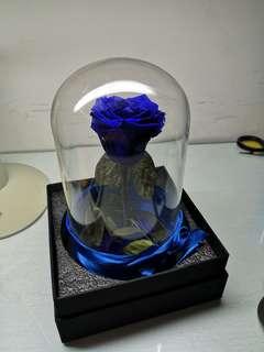 🚚 永久花-藍色妖姬