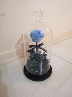 Preserved Flower in Jar with LED