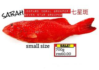 Frozen Fish from SABAH