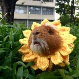 🚚 天竺鼠向日葵頭套