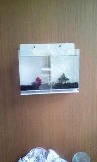 Aquarium mini gantung dinding ikan cupang