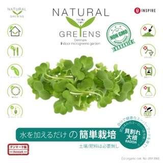 [新品特價] NATURAL GREENS 有機白蘿蔔 | 10天室內種植套裝 - 【 Bestbeautyhk】