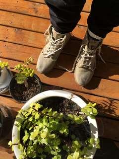 Latte Boots