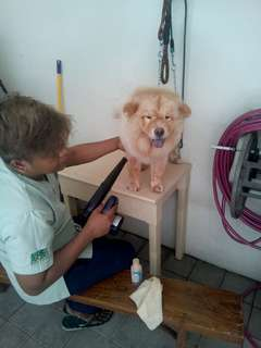Home service grooming