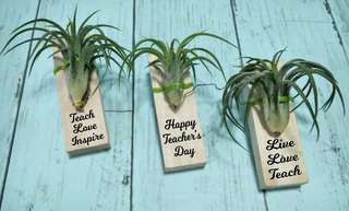 PERSONALISED Air Plant TEACHER'DAY GIFTS
