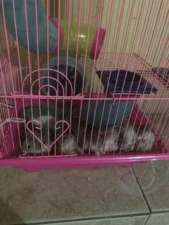 hamster daerah jabodetabek
