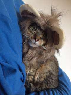 Pet Lion Costume