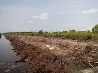 Tanah utk kebun Sawit di ketapang Kalimantan