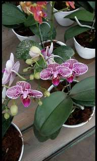 Bermacam2 senis tanaman bunga