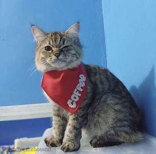 Personalized Cat Bandanas