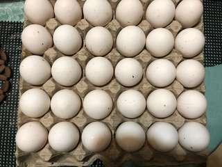 Eggs ..