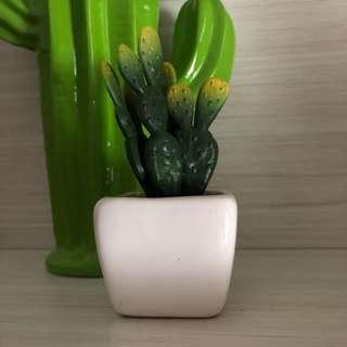 Cactus decoration