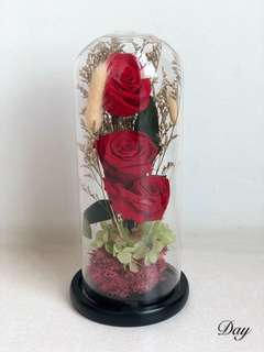 Preserved Classic Red roses with container (black base)