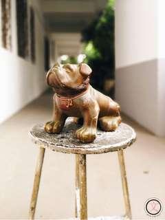 DC050 Vintage bulldog piggy coin bank