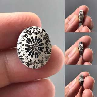 Fossil Coral Stone
