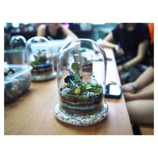 Terrarium workshop with J2 - 15th July