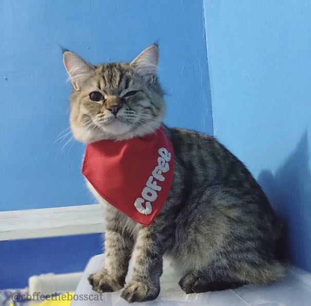 81325e517a21 Personalized Cat Bandanas, Pets Supplies, Pet Accessories on Carousell