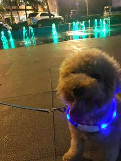 USB Rechargeable Dog Collar with Light