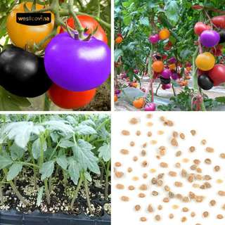Rainbow tomato Seeds organic fruits