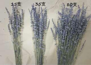 🚚 薰衣草 乾燥花 英國藍 35支