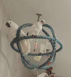 收大型鸚鵡棉繩圈麻繩圈遊戲圈地球圈