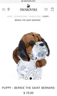 Puppy -Bernie the Saint Bernard
