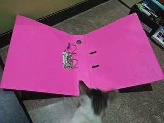 Map pink banteq
