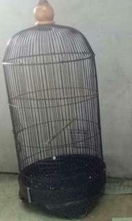 Burung lovebird josan