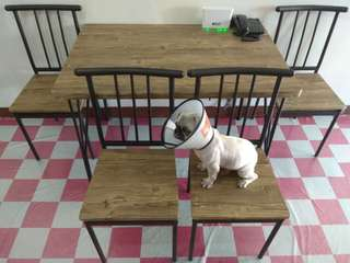 3 Mos. Dining Set (good as new, dog not included.)
