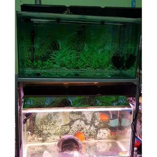 Two 3x1.5x1.5Ft tank with stand