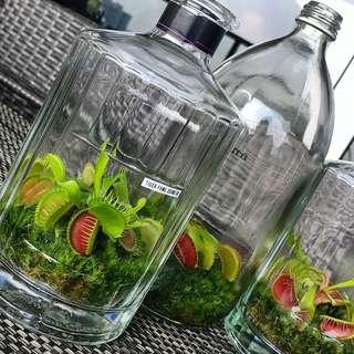 Terrarium Garden in a Bottle