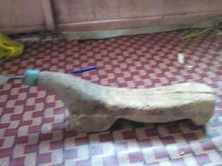 Kukur kelapa lama