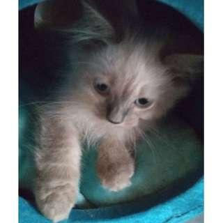 Pet Cat Bed / Cat Tunnel