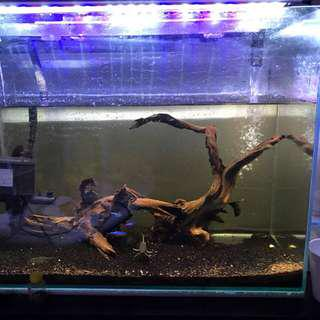 2ft Tank fish tank Everything for free!