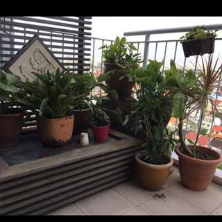 Assorted plants with Working Water Fountain and Stand