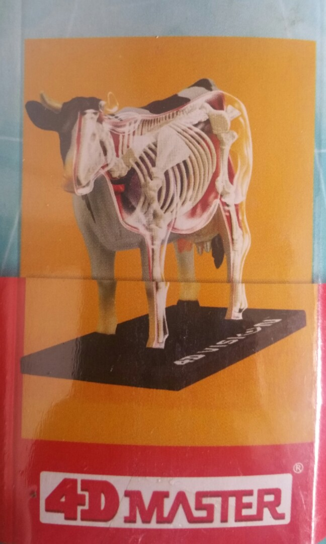 4d Vision Cow Anatomy Model Toys Games Bricks Figurines On