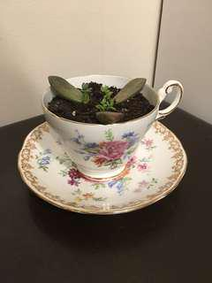 Succulent Arrangement Tea Cup