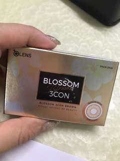 BLOSSOM 3CON (BROWN) OLENS