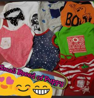 Dog Clothes Bundle