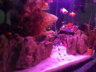 Full set akuarium aquascape