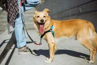 Zee Dog Soft Walk Harness